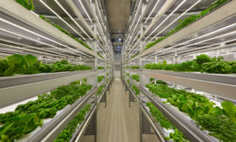 iFarm - vertical farm in Finland